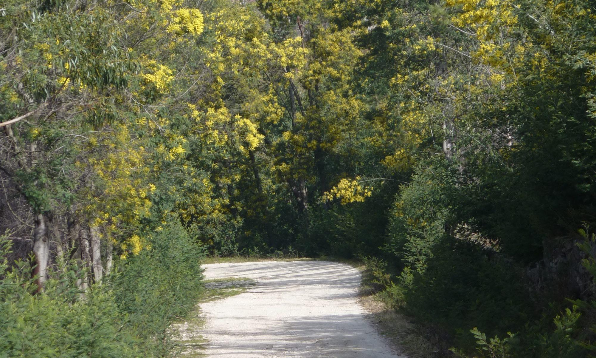 Mimosa wandelingen